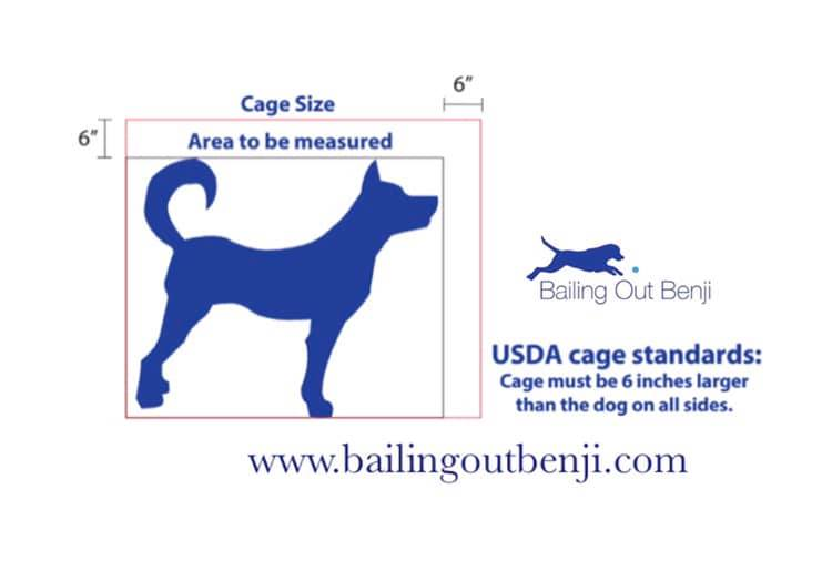 About Puppy Mills | Bailing Out Benji
